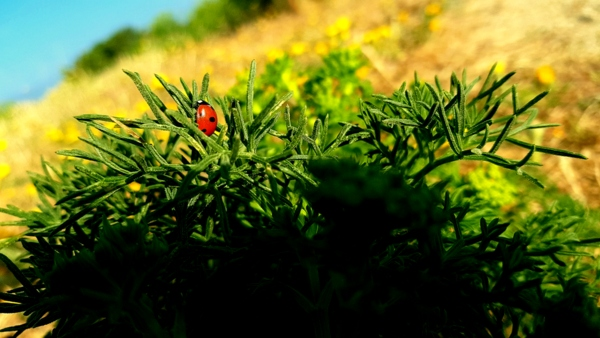 ladybird wildlife creative green field beach